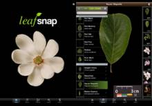 Leafsnap Interface