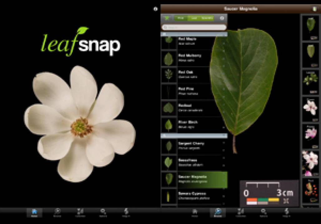 Descriptive image for Prof. David Jacobs iPhone App LeafSnap mentioned in NY Times